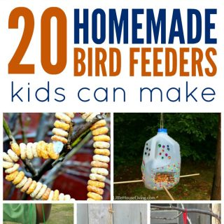 Homemade Bird Feeders Kids Can Make