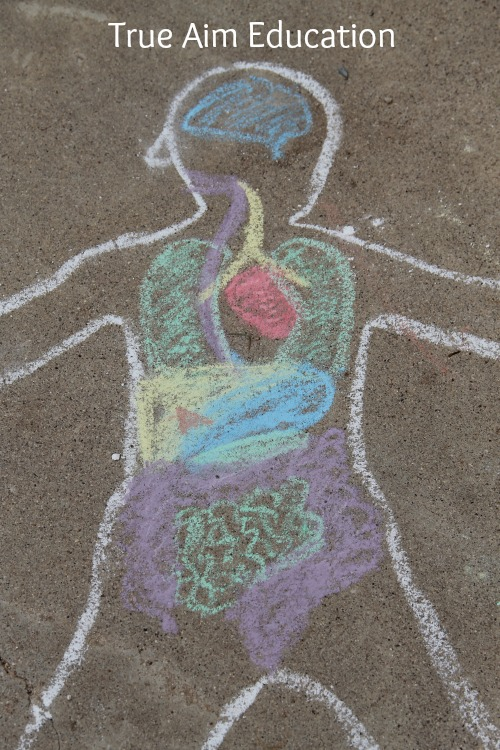 Chalk Anatomy Activity